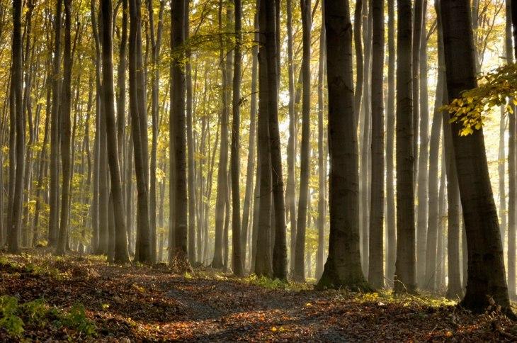 pădurile-virgine-6 (1)